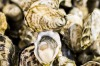 Heavenly flavours: Angel Oysters.