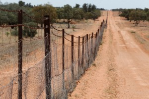 The Dingo Fence is one of the longest structures in the world.