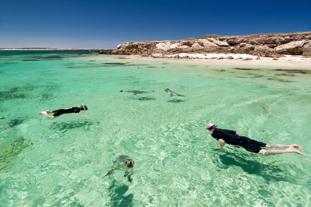 Swimming with sea lions on the Eyre Peninsula.