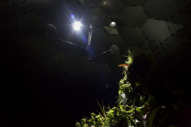 Plants grow inside the Lowline Lab in New York where special technology has been used to pipe in sunlight beneath the ...