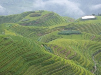 This photo was taken at Longii, near Guilin, China in September 2015. It is part of the amazing terraced rice fields in ...