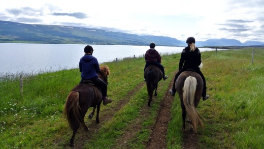 Skjaldarvik riding tours use the ancient small Icelandic horse.