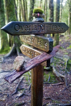 Hiking through the Tasmanian wilderness: It may not everyone's cup of Billy tea, but such an active holidays can really ...