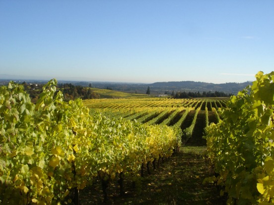 WILLAMETTE VALLEY, USA: Away from the world's famous wine regions are other fine surprises, notably Oregon's Willamette ...