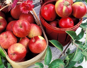 Fresh produce is a feature of Quebec city and surrounding villages.