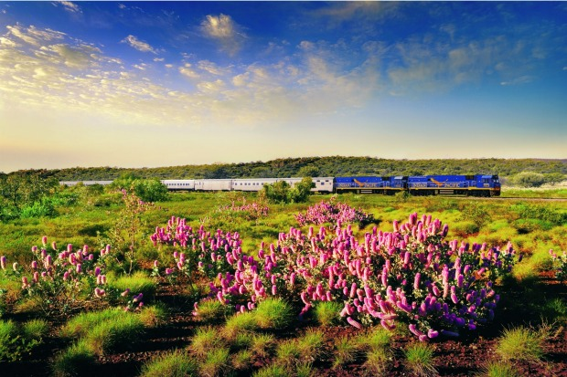 The Indian Pacific on passes wildflowers on its 4352 kilometre route between Sydney and Perth.