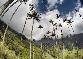 Cocora Valley - Colombia Did a 2 day trek from the Cocora Valley up to the Los Nevados and back. One of the highlights ...