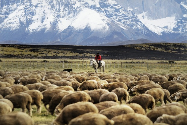 There are working ranches (Estancias) surrounding Tierra Patagonia.
