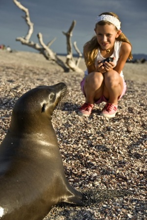 A young girl closely observes a Galapagos sea lion.