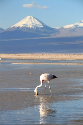 There's almost an embarrassment of natural riches in Chile. From top to bottom of this pencil-thin land, stunning ...