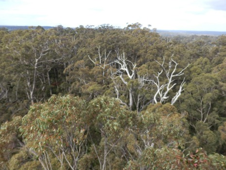 On a clear day, it's possible to see for 40-odd kilometres and the birds are flying beneath you.