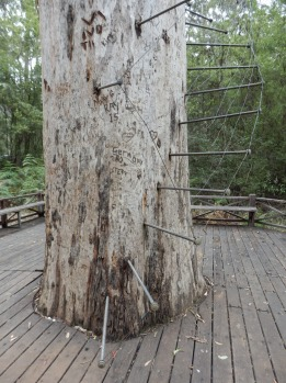 It is surrounded by some of the tallest trees on earth – the centuries-old karris of south-west WA – and nonchalantly ...