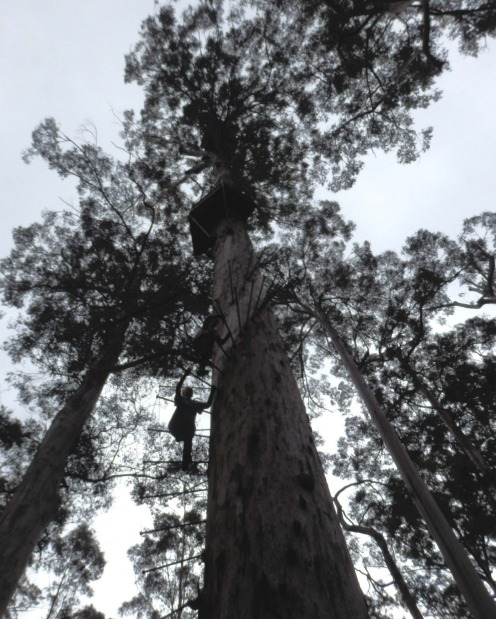It's 165 pegs to the top: Dave Evans Bicentennial Tree.
