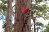 The Pemberton Climbing Trees, Western Australia: There's a difference between standing at a height and having to climb ...