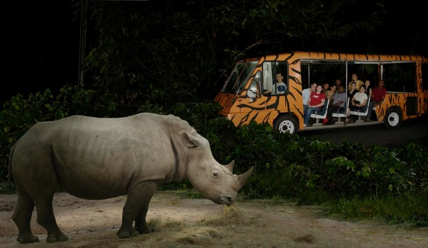 The world's first night safari in Singapore.
