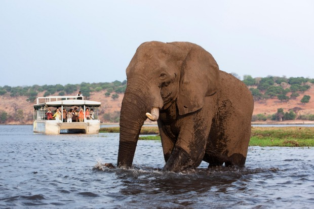 Cruise through Chobe National Park, Botswana.