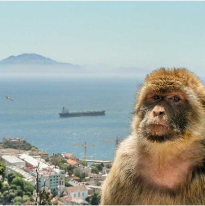 'Guarding the Rock'. Here is a sweet little barbary ape on Gibraltar. And that's Africa in the distance across the sea.