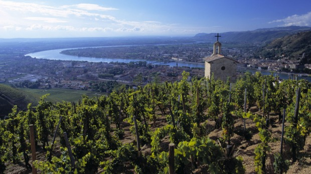 Syrah vines around La Chapelle on the hill of Hermitage above Tain l'Hermitage.