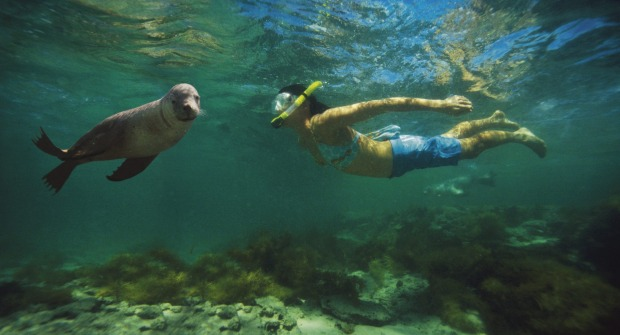 Swimming with the Sealions, Baird Bay, Eyre Peninsula.