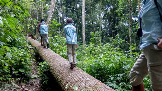 Trekking in the Gunung Leuser National Park with Johan and Udin.