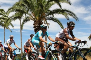 Palms line the route of Stage 1, the Nuriootpa to Angaston leg.