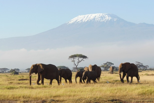 Mt Kilimanjaro, Tanzania: Kili's glaciated summit almost straddles the equator, but much of its popularity comes from ...