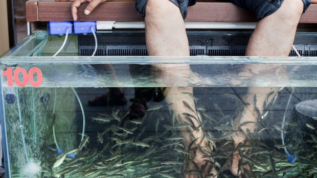 Feet cleaning fish in south east asia not worth the risk for Fish cleaning feet