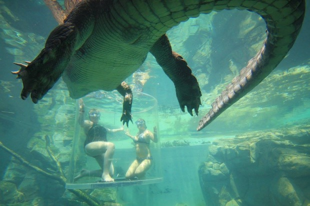 Adventurous swimmers clamber into a see-through acrylic box within their enclosure, and what happens next depends on the ...