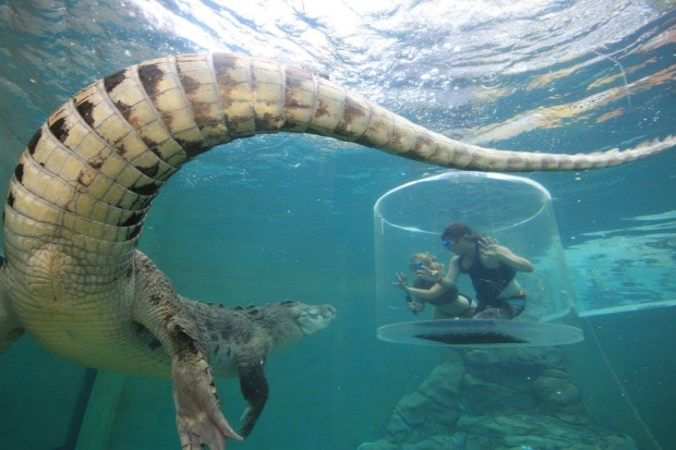 SALTWATER CROCODILES: Crocosaurus Cove in Darwin offers the change to get unnervingly close to salties you'd run a mile ...