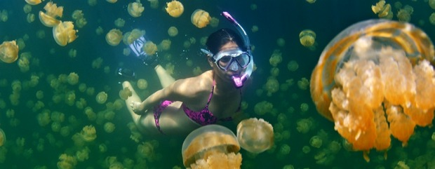 JELLYFISH: The snorkelling on the reefs in Palau is arguably better than anywhere else on earth, but there's one marine ...