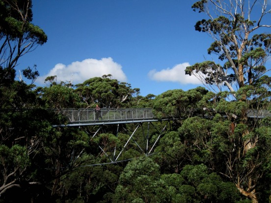 Walpole Tree Top Walk, Southern Forests, WA.