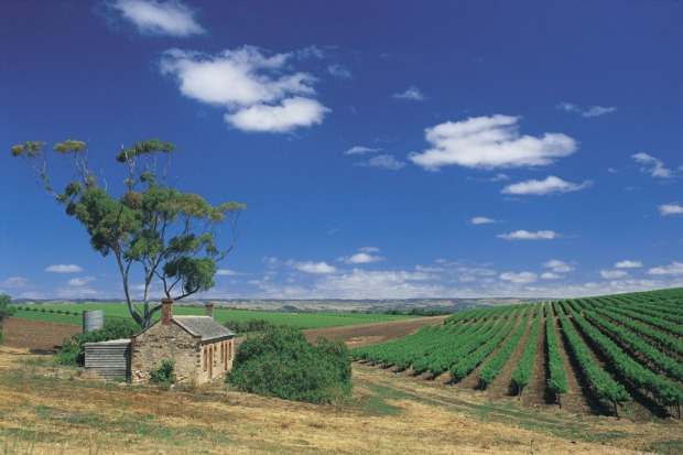 Vineyard in the Fleurieu Peninsula, South Australia.