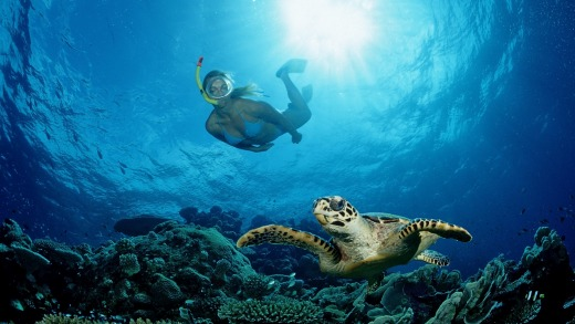 Close encounter with a hawksbill turtle.