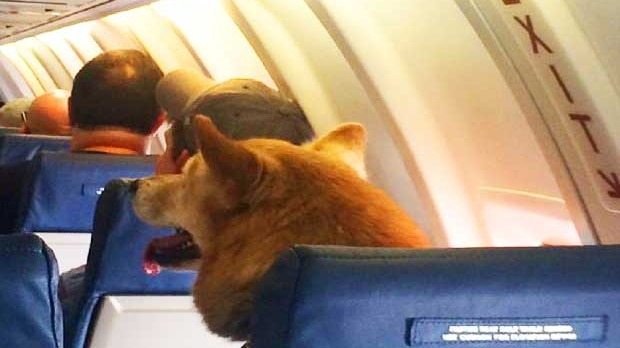 The dog scores the lucrative emergency exit row seat.