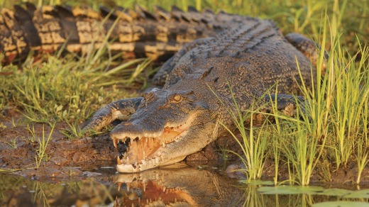 Kakadu National Park is home to many saltwater crocodiles.