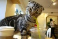 Don't let your straws out of sight at Cheong Chun cat café .