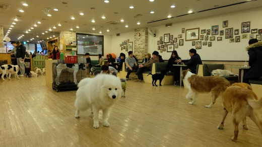 Twenty or so dogs of all sizes charge around the big interior.
