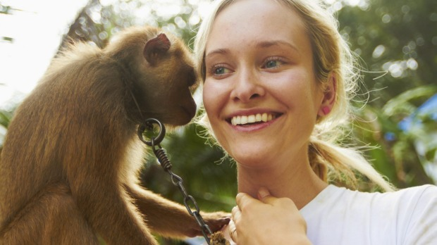 When you pose for a selfie with a monkey, ask yourself how it was trained to be so docile.