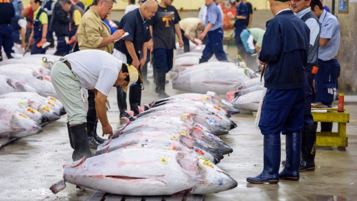 The tuna auction at Tsukiji Market. If you want to be one of the few tourists allowed to see it, you'd best arrive at 3am.