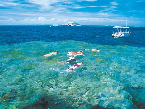 Snorkelling tour of the Low Isles in Tropical North Queensland.