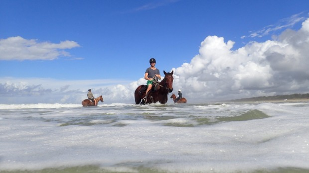 Even the horses around Coffs Harbour love the surf.