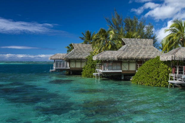 Beautiful Moorea island, French Polynesia.Turquoise water, corrals, colourful fish, turtles, dolphins and lovely people ...