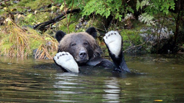 Great Bear Rainforest Outer Islands Kayak Expedition - British ...
