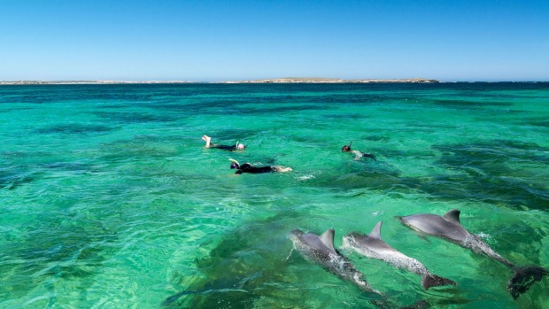 The local pod - swimming with dolphins at Baird Bay.