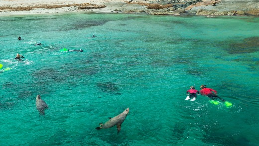 Swimming with seal lions at Seal Cove.