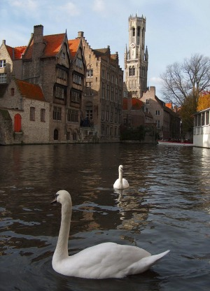 Swans on a picturesque canal in Bruges.