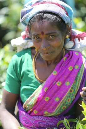 It was a privilege to come across this friendly and hard working woman in the tea fields in Sri Lanka. There is a story ...