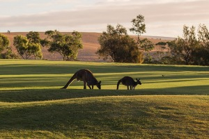 Wirrina Hotel and Golf Course on the Fleurieu Peninsula.