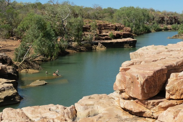 CHARNLEY RIVER:  Charnley River (formally Beverley Springs Station) is owned by the Australian Wildlife Conservancy. As ...