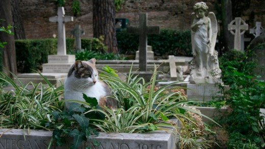 A cat makes itself at home in Cimitero Acattolico.